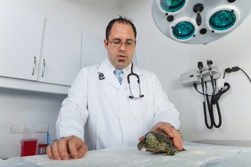 Turtle at veterinarian