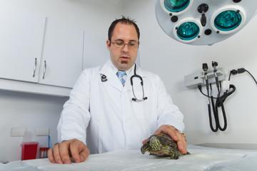 Turtle at veterinarian
