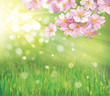 Vector of spring blossoming tree on green background.
