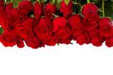 Fototapety border of fresh red  roses
