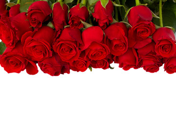 border of fresh red  roses