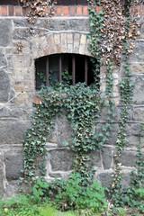 Kellerfenster mit Gitter und Efeu