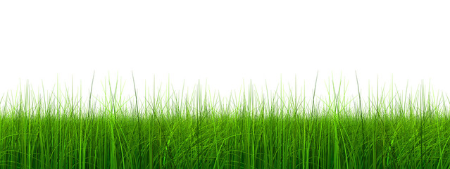 High resolution 3d green grass isolated on white