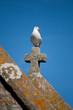 Gabbiano a Mont Saint-Michel