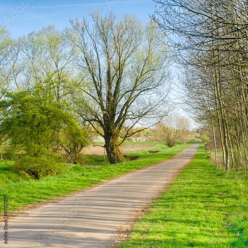 Radweg in sonniger Frühlingslandschaft, Frühlingsanfang