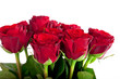 rote Rosen als Strauß vor weißen Hintergrund
