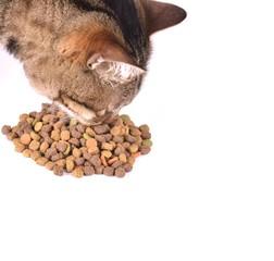 repas pour chat