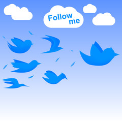 Follow me birds