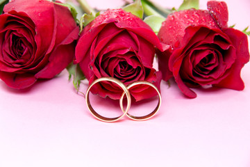 Red roses with water drops and wedding rings
