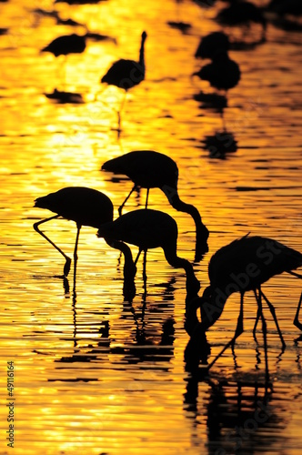 Gold sunrise with bird's silhouette