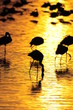 Gold sunrise with bird