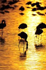Sunrise at lake Nakuru, Kenya