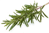 Fresh rosemary isolated on background white_IV