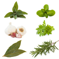 set of six herbs on white background