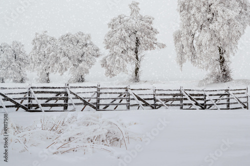 snowy trees in winter landscape