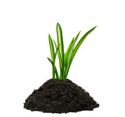 Gräser wachsen aus einem Häufchen Erde