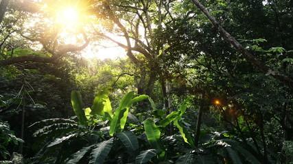 In green solar jungles of Central America
