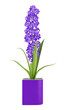 purple flower in pot isolated on white background