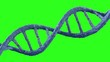 3D Animation of a DNA with Green Screen