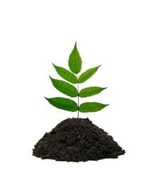 Zweig wächst aus einem Häufchen Erde