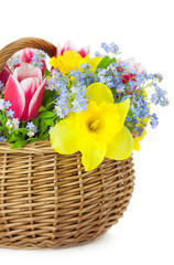 Bouquet of Spring Flowers in Basket  / isolated