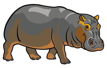 hippopotamus on white