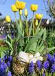 Tulpenblüte und Ostereier