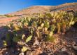 Fuerteventura, Tindaya