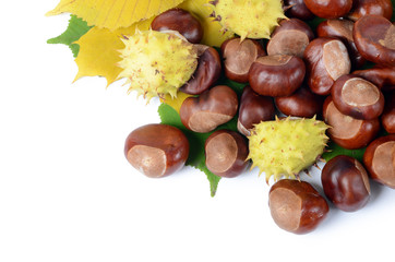 Chestnuts on autumn leaves isolated on white background