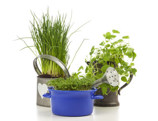 Chives, garden cress and lemon balm