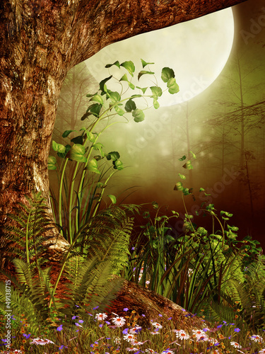 Stare drzewo w lesie na tle księżyca
