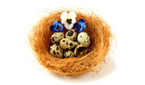Nest with  quail eggs and pansy  flowers