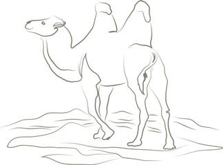Ein Kamel in der Wüste