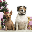 Yorkshire Terrier and Jack Russell Terrier sitting