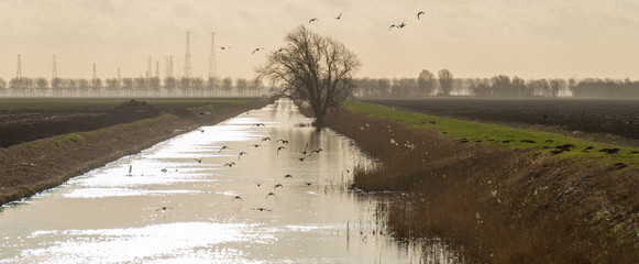 Birds flying over a sunlit canal in winter
