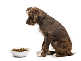 Side view of Crossbreed, 5 months old, sitting next to a bowl