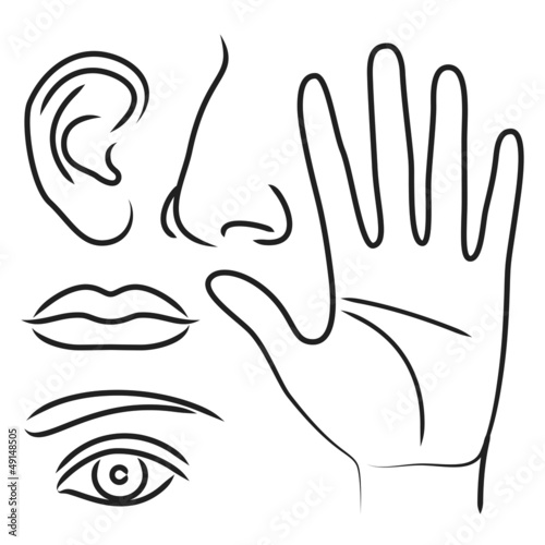 Sensory organs hand, nose, ear, mouth and eye