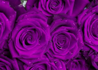 lila rosenstrauß