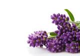 Fototapety lavender bunch