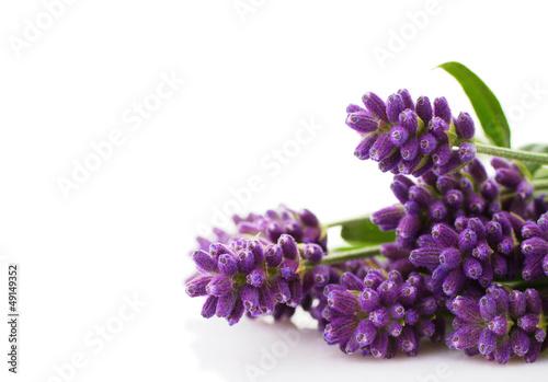 Papiers peints Lavande lavender bunch