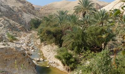 Wadi Qelt creek in Judean Desert  in spring