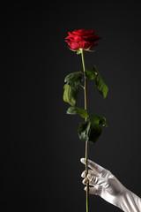 Rose mit Hand
