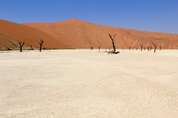 Sossusvlei dead valley landscape in the Nanib desert near Sesrie