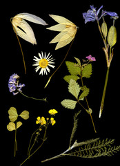 herbarium on a black background