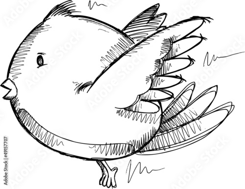 Bird Sketch Drawing Vector