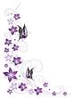 Ranke, flora, Blüten, Schmetterlinge, lila, violett