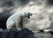 Leinwandbild Motiv White Polar Bear Hunter on the Ice in water drops.