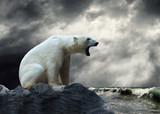 Fototapete Wasser - Eis - Meeressäuger