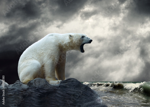 Fotobehang Ijsbeer White Polar Bear Hunter on the Ice in water drops.