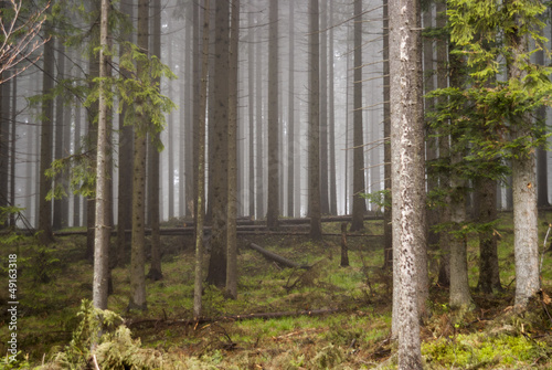 Foto op Canvas Bos in mist cichy las